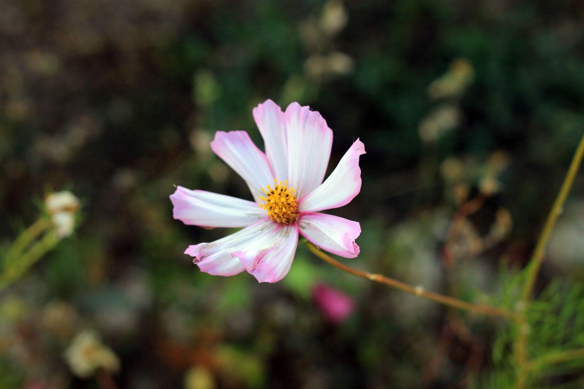Fleurs les terres de maia